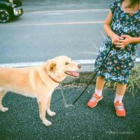 わんちゃんと散歩 - BobのCamera