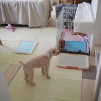 子犬が我が家にやって来た 2 - * cinqante - サンカント *