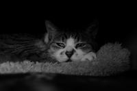 Happy Caturday - aya's photo