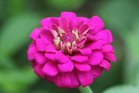 庭の花 - マミィの花と手づくりの時間