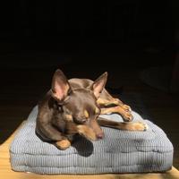 お昼寝マロン - 続 暮らしの中のアトリエ