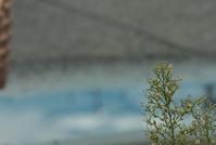 我は草なり - 赤煉瓦洋館の雅茶子