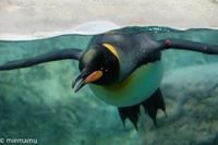 旭山動物園にて~迫るペンギン! - My favorite ~Diary 3~