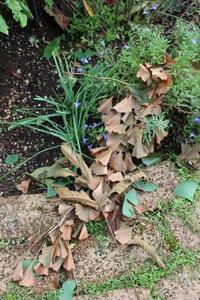 嵐の過ぎ去った後 - ペコリの庭 *