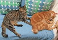 レオと小鉄 - 世帯主は猫なんです。