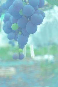 実り季節 - 赤煉瓦洋館の雅茶子
