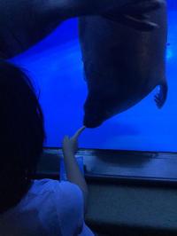 サンシャイン水族館その8 - ブリキの箱