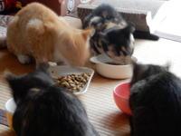 台風の夜のお泊り会 - 愛犬家の猫日記