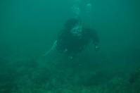 ダイバー(diving)。 - 青い海と空を追いかけて。