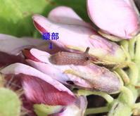 ■■ぶどうの香りに包まれて♪~2~■■ - Sippo☆のネイチャー探索記 2