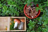 森は食の宝庫きのこ - Kippis! from Finland