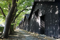 山形の旅#10酒田②山居倉庫とケヤキ並木 - 風の彩り-2