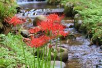 彼岸花が咲く - 晴れ時々そよ風
