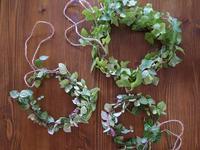 カットした観葉植物の葉っぱをリースに再利用 - yukaiの暮らしを愉しむヒント