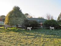 住宅地の春 - いい旅・夢Kiwi スカイキウィの夢日記