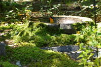 秋の陽を浴びて。キビタキとメジロとひがらと。 - Naturfreude