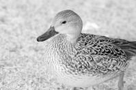 食物連鎖(※鳥写真注意!) - THANKS
