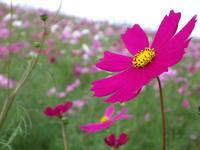 幸せ気分の秋の花ばなと! - 一場の写真 / 足立区リフォーム館・頑張る会社ブログ
