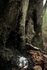 樹幹流 - こんなものを見た2