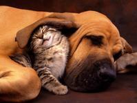 犬&猫のエマージェンシー講習会 - はばたけ MY SOUL