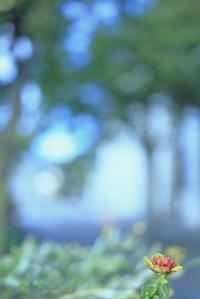 ワタシハココヨ - 美は観る者の眼の中にある