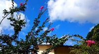 青空と百日紅 - 金沢犀川温泉 川端の湯宿「滝亭」BLOG