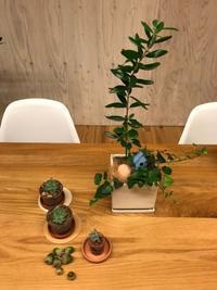オリーブの寄せ植えイベント♪ - Bleu Belle Fleur☆ブルーベルフルール