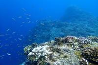 17.9.22海も凪ぎってます。 - 沖縄本島 島んちゅガイドの『ダイビング日誌』