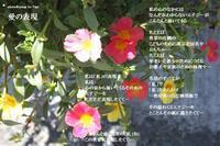 愛の表現 - 花の咲み、花のうた、きらめく地上 ―― photo&poem gallery kannon花音