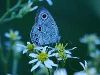 加曾利貝塚公園の喋々 - 花と葉っぱ
