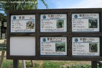 2017年9月京都市動物園その6ゾウにスイカをプレゼント - ハープの徒然草