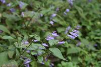 秋分(9/23~10/7)のころ、宮迫で咲く花 - 宮迫の! ようこそヤマボウシの森へ