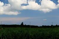 緑のはずが... - 南の島の飛行機日記