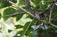 秋の渡りの鳥たち - うちのまわりの自然新聞
