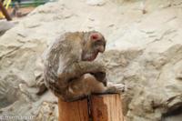 旭山動物園にて~さる山 - My favorite ~Diary 3~