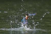 今日は2回も池に行ってきました。 - My Photo Life