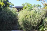 初秋の鎌倉海蔵寺の萩 - 暮らしを紡ぐ