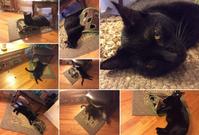 猫のおもちゃは心の友 - にゃんこと暮らす・アメリカ・アパート