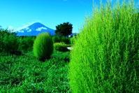 29年9月の富士(14)河口湖の富士 - 富士への散歩道 ~撮影記~