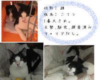山の猫避妊去勢活動再開 - 大波の会 日記