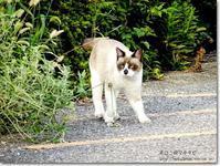 【き】気の毒なカラーリングのネコ:きのどくなからーりんぐのねこ - ネコニ☆マタタビ