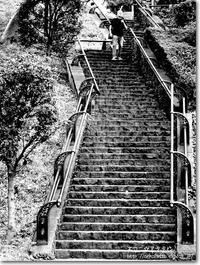 【す】素敵階段:すてきかいだん - ネコニ☆マタタビ