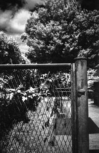 フェンスに絡まる残酷なコントラスト - Film&Gasoline