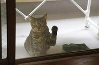 最近の猫事情34 - 鳥会えず猫生活
