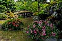 サツキが彩る京都御所 - 花景色-K.W.C. PhotoBlog