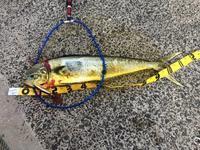 第3回 長崎遠征1日目 - ロンの釣り、時々日常。