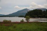 福島 北塩原村 桧原湖のミソハギ その1 - 日本あちこち撮り歩記