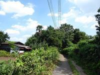 吉祥寺に近いのにここはどこ?な散歩道♪玉川上水緑道散歩♪ - ルソイの半バックパッカー旅