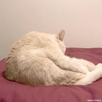 しゃべるポンコ - 賃貸ネコ暮らし|賃貸住宅でネコを室内飼いする工夫
