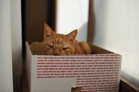 箱を置いたら&ホットカーペット(パナソニックかんたん床暖) - ほんじつのトムさん